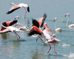 Exposición fotográfica aves CLC